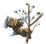Contact our diligent Garden Maintenance staff for any needs you may have
