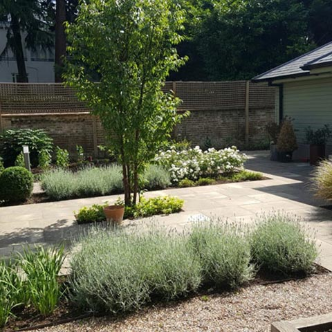 Garden renewal with new planting, pruning and pathways overhaul in Teddington
