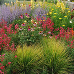 About Bloomin' Marvellous and our Professional Gardeners and Landscapers