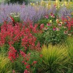Beautifully colourful grasses and perennials in Teddington