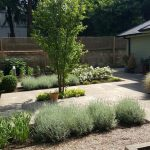 Garden renewal with new planting pruning and pathways overhaul in Teddington